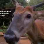 Buck Up Close