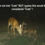 Fawn with Buck