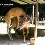 Bucks No comment