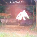 Bird Flash B